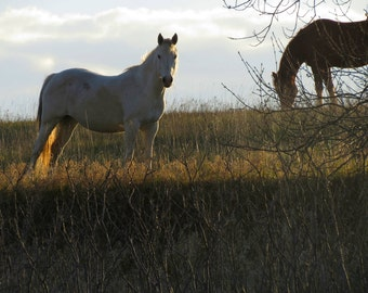 Sasha Fierce Horse Series