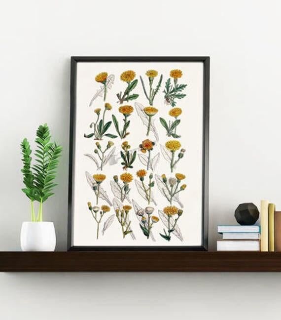 Wall art print Dandelion collection, Dandelion White paper print, Giclee print dandelion wall decor, Wild flower study, Home decor BFL214WA4