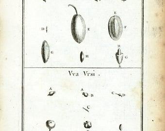 1797 Antique Olive Tree Flower Fruit Print Botanical Natural History Wall Home Decor