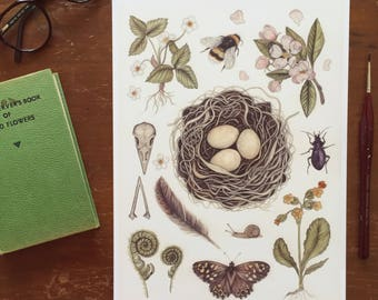 Spring Birds Nest A4 Giclee print - bee