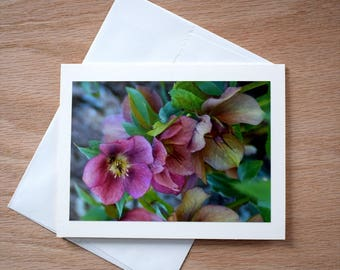 Blank Notecard; Pink Lenten Rose on 5x7 Notecard; Blank Greeting Card; All Occasion Card; Easter Note Card