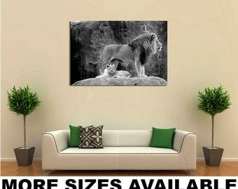 Wall Art Giclee Canvas Picture Print Gallery Wrap Ready to Hang African Lion (Panthera leo krugeri) bw 60x40 48x32 36x24 24x16 18x12 3.2