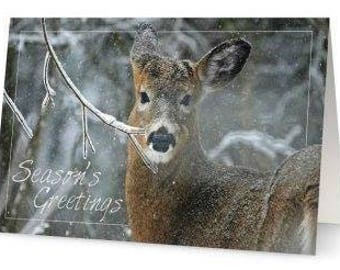 White-tailed Deer Holiday Card - Single card only