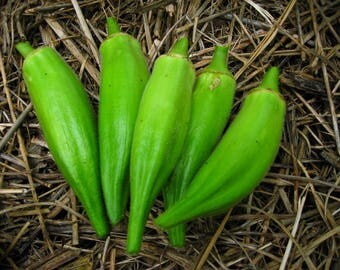 Okra Gold Coast, 5 seeds