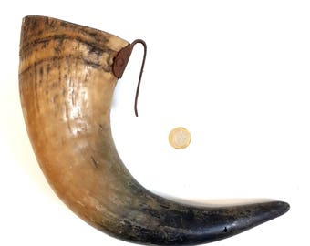 Vintage french cow horn, taxidermy