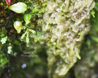 Nature Macro, Fine Art Photography Print, Multiple Sizes, Nature Photography