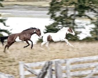 Horses Kicking Their Heels Up