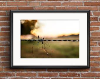 Barbed Wire Sunrise North Carolina Rural Scene 8x10 16x20 Landscape Photography Fine Art Print Canvas Print Wall Art Photograph