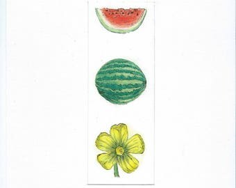 The pencil drawing watermelon fruit and flower