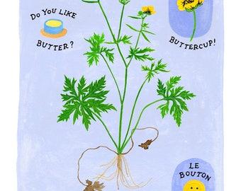 Buttercup botanical art print - modern botanical art - buttercup illustration - buck up, buttercup - garden art