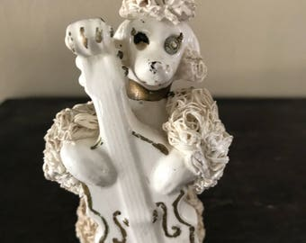 Talented Spaghetti Poodle playing Cello Vintage