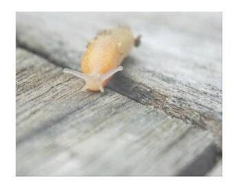 Rustic Slug- Canvas Gallery Wall Art - 8 x 10, 16 x 20, 24 x 36