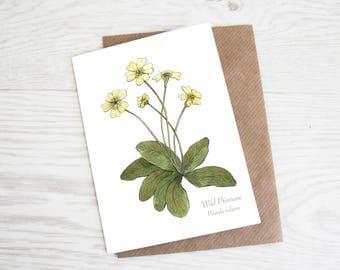Wild Primrose, Botanical Wildflower Print, Greeting Card