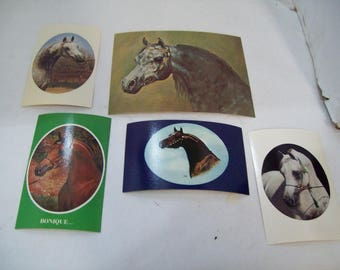 Set of Five Arabian Horse Postcards, Ibn Raffon, Bonique, Tishamba, Free Shipping