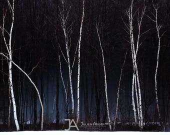 SMALL SIZE - Photography - Quebec - Winter - Snow - Trees - Spring