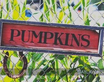 Pumpkin Farm - Fine Art Print - 8x10 11x16, Landscape Photograph