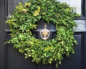 Fresh Boxwood Wreath | Front Door Wreath | Fall Wreaths for Front Door | Door Wreaths for Fall | Autumn Wreaths | Wreaths for Autumn | Gifts