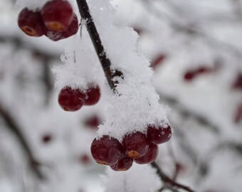 Winter Berry Digital Photography