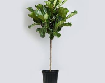 Indoor tree | Etsy