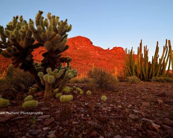 """Desert Landscape with """"Jumping"""" Cholla Cactus in Foreground - Southwestern Sunset Arizona Succulent Nature Green Red Orange Brown Photograph"""