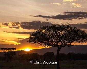 Serengeti Sunset, fine art, wall art, Photograph