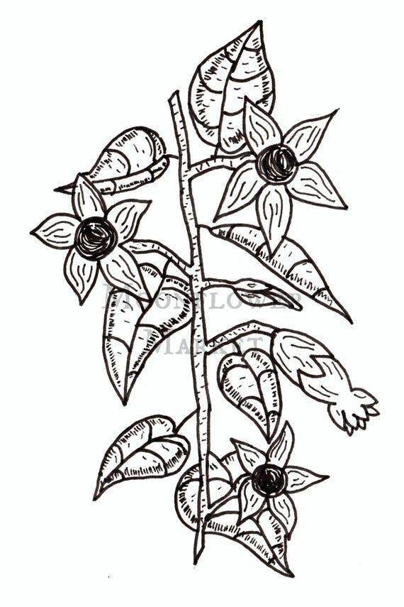 """Poison Garden: Atropa Belladonna 5""""x7"""" Print"""