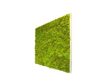 table square lichen plant