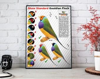 Show Standards Gouldian FInch Poster 32x48 cm