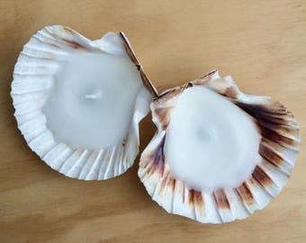 Large scallop shell candles