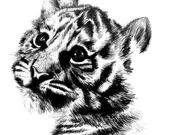 Little lion, drawing