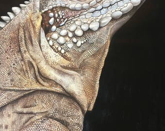 Cyclura Rhino Iguana Original Artist Print