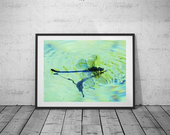Nature Photography, Dragonfly Photo, Digital Print, Blue-Black-White , Wall Art, Printable Poster, Digital Download, 3 JPG's