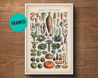 French Vegetable Print, Framed Art, Botanical Print, Botanical Art, Framed  Botanical Art
