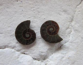 Ammonite. 2 Pcs. S0572