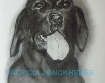 Dog portrait or another animal in charcoal (photo examples)