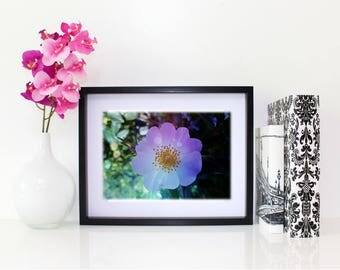 See The Light Speckle, Floral Photography, 6x8 matted print, wall art, matted photo, 6x4 print, Flower print, Flower Photo, Modern Art
