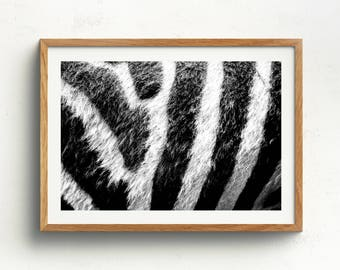 Zebra Wall Decor zebra wall art | etsy
