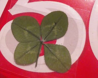 Genuine Kentucky Four Leaf Clover, 4 Leafed White Clovers, Authentic,  Good Luck Charm, Shamrock Clover, Luckie Charms, Keepsakes