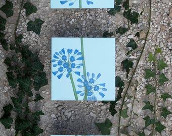 Light blue agapanthus