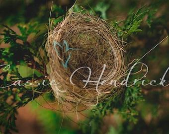 Digital Backdrop; hummingbird nest