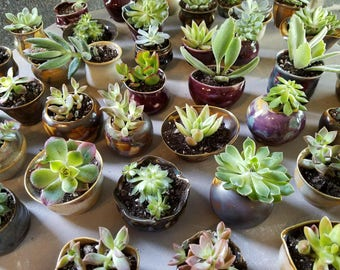 Handmade Pots for Succulents, WEDDING FAVOR, Lot of 100