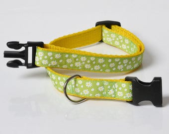 Dog collar and lead, 19mm width