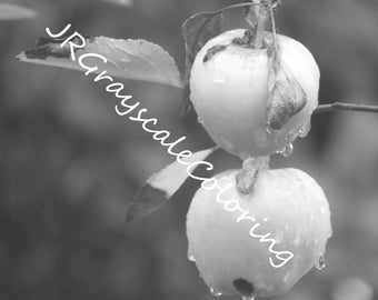 Bruised Apples Grayscale