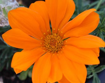 Orange Flower at the Park, photo, digital download