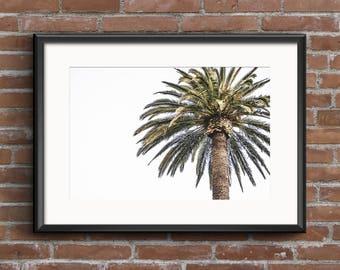 Palm Tree Photography, Palm Tree Print, Digital Print, Photography, Art Print