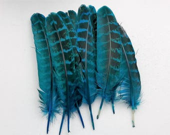set of 10 feathers turquoise 10-15cm
