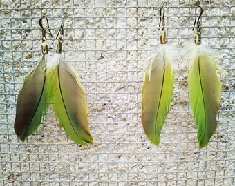 Wild Small Parakeet Feathers Earrings (Pair)