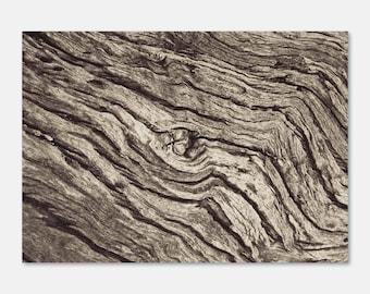 Trunk | Wall Art Print, Photography, Black & White, Texture