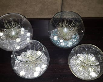 Small air plant gift