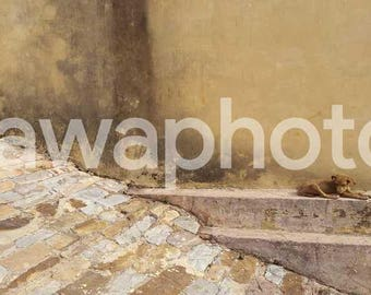 Puppy resting on stone wall - 16x30 Art print on canvas